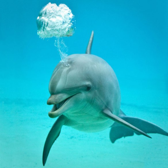 funny dolphin bubbles pictures