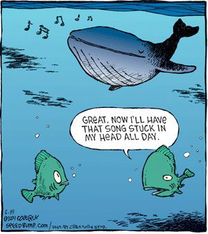Funny Whale songs