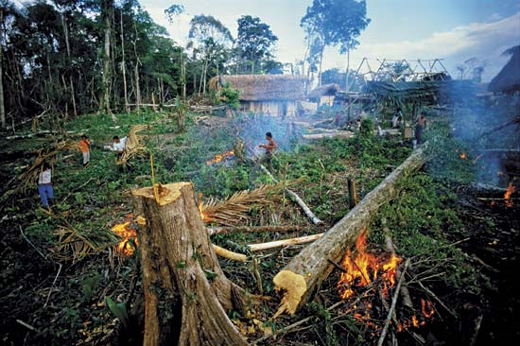 Environmental-Problems-Rainforest-Destruction