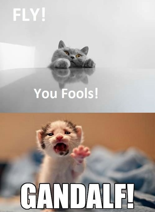 Fly-You-Fools funny picture