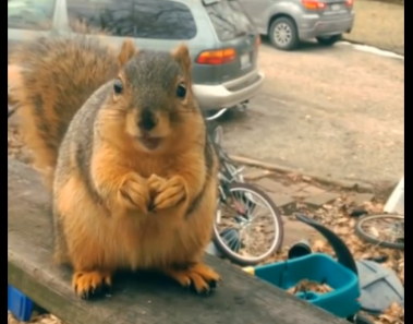 Cute little talking squirrel