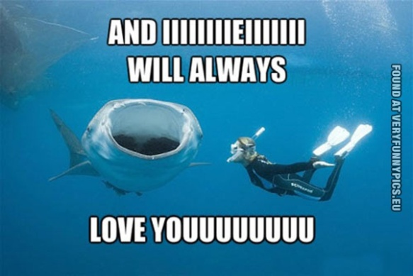 funny-picture-whale-singing